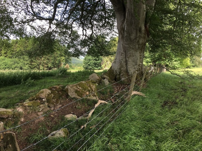Stones and trees separate upper part of farm from the lower