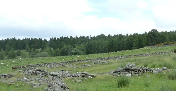 P1040348-cragg-sheep-2